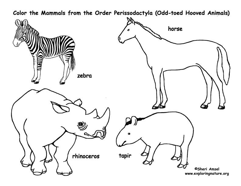 792x612 Zebras, Horses, Rhinos, Tapirs