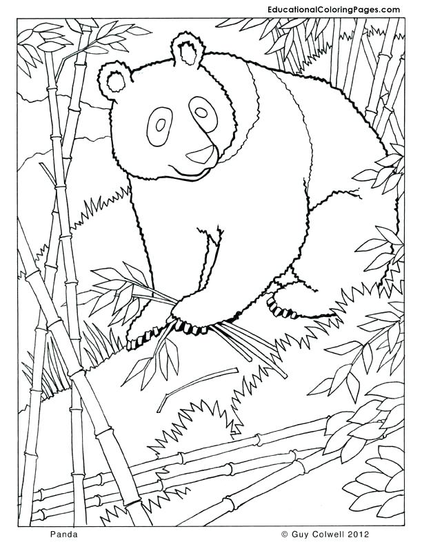 612x792 Mammal Coloring Pages