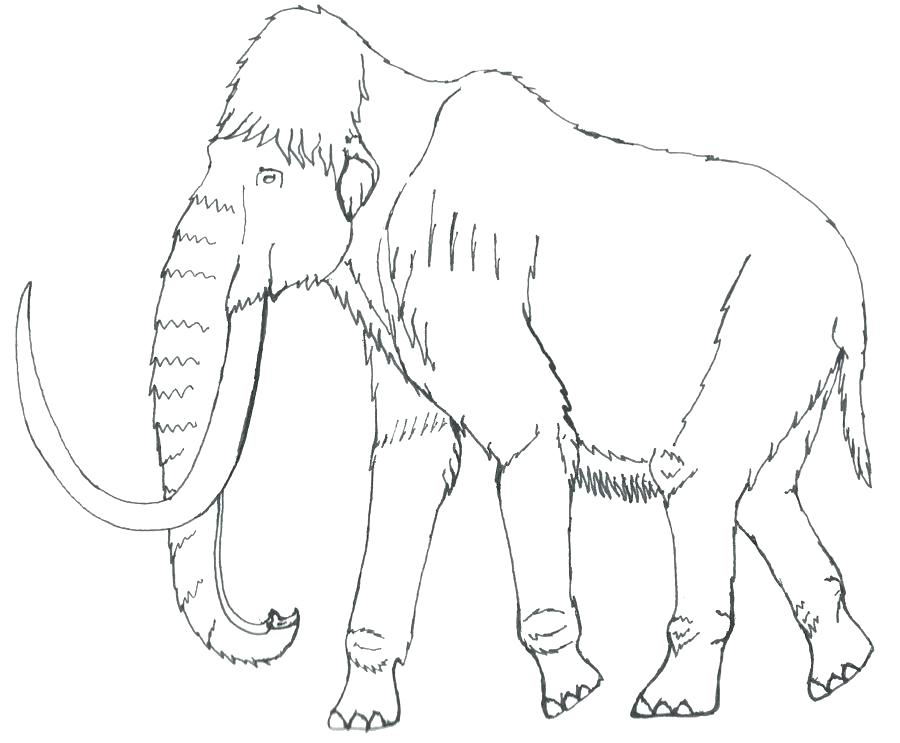 900x743 Wooly Mammoth Coloring Page Mammoth Coloring Page Mammoth Coloring