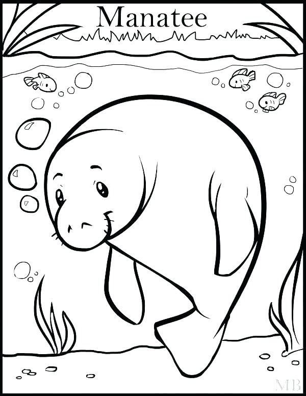 600x776 Manatee Coloring Page Manatee Coloring Pages Manatee Coloring