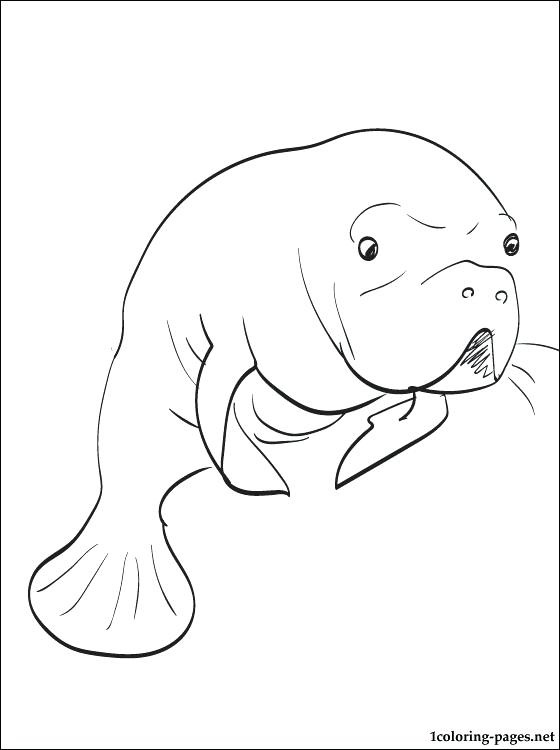 560x750 Manatee Coloring Pages Manatee Coloring Page Free Manatee Coloring