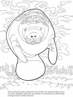 236x310 Manatee Coloring Page Manatee, Worksheets And Craft