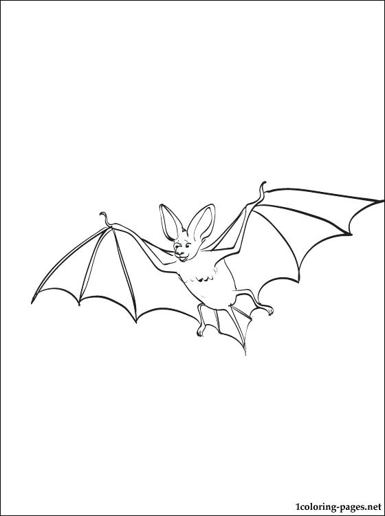 560x750 Bat Printable Bat Cut Out Printable Bat Pictures Print Bat