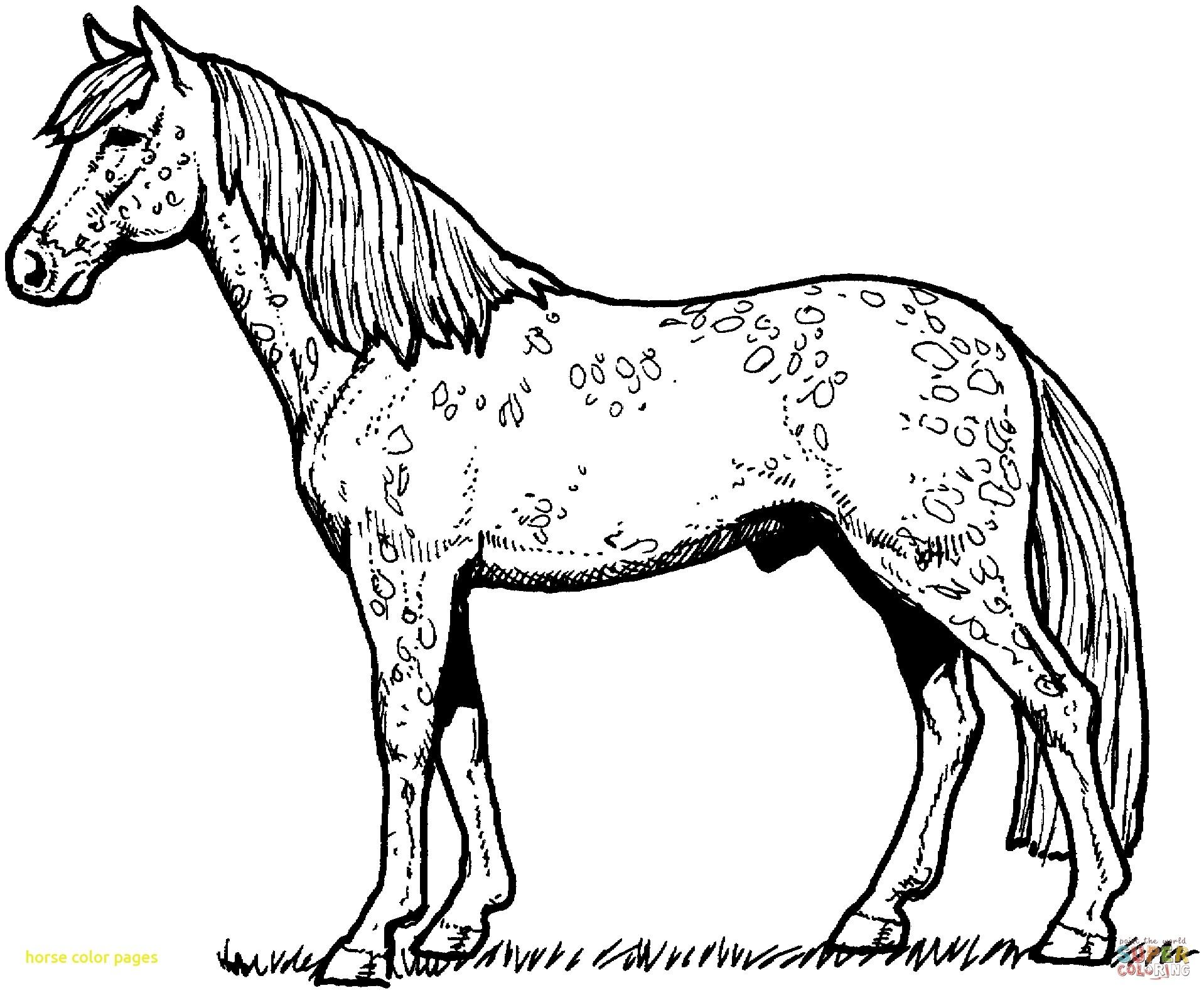 1918x1581 New Unicorn With Mandala And Paisley Ornament Horizontal Adult