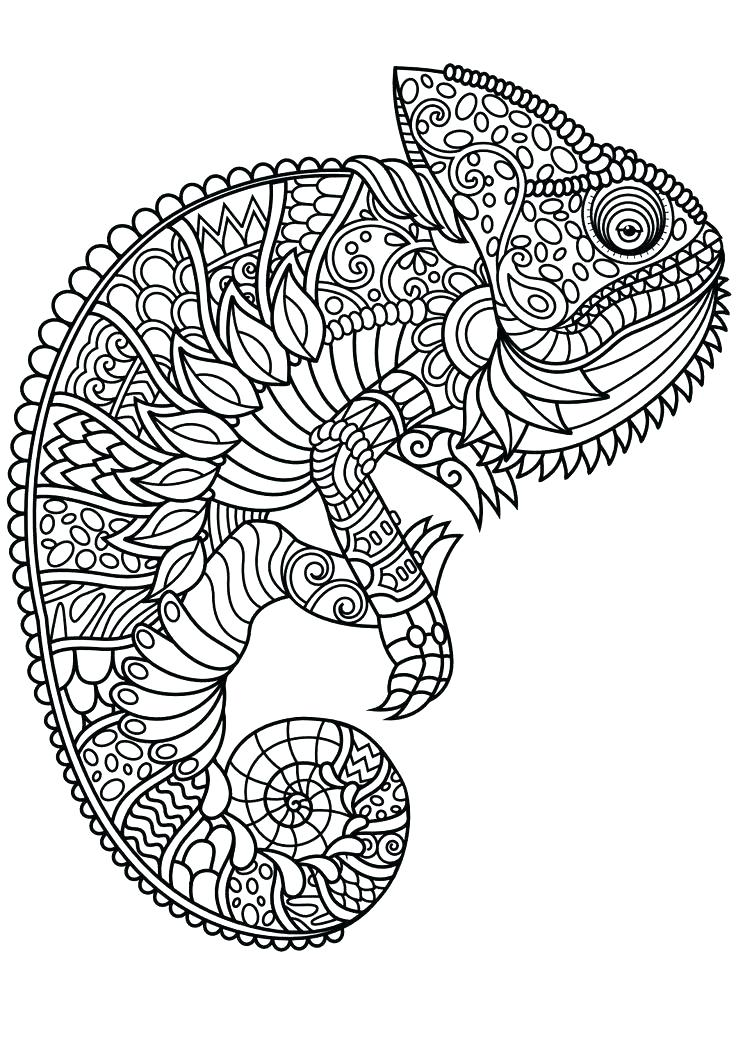 736x1040 Realistic Sea Animal Coloring Pages Creatures Pictures Animals