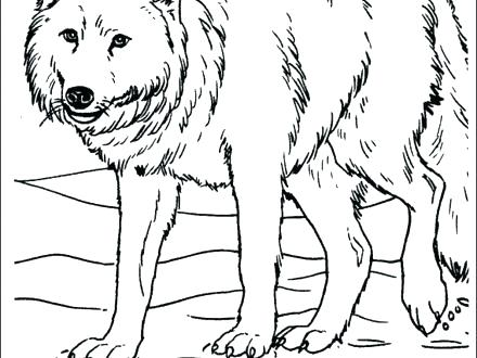 440x330 Anime Wolf Coloring Pages