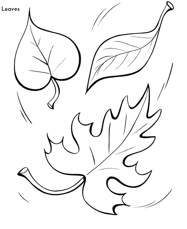 600x734 Big Leaves Coloring Pages Printable Coloring Maple Leaf Coloring