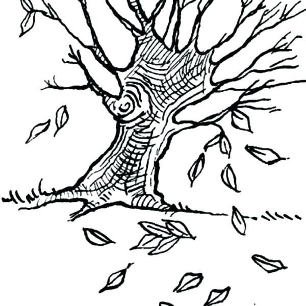 600x600 Fall Leaves Coloring Sheets Fall Tree Coloring Pages Maple Tree