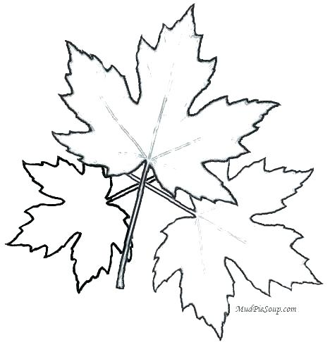 468x486 Leaf Coloring Maple Leaf Coloring Page Printable Leaves Coloring