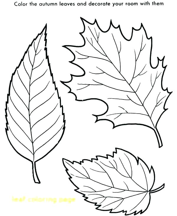 600x734 Leaf Coloring Pages For Kindergarten Fall Leaves Page With Maple