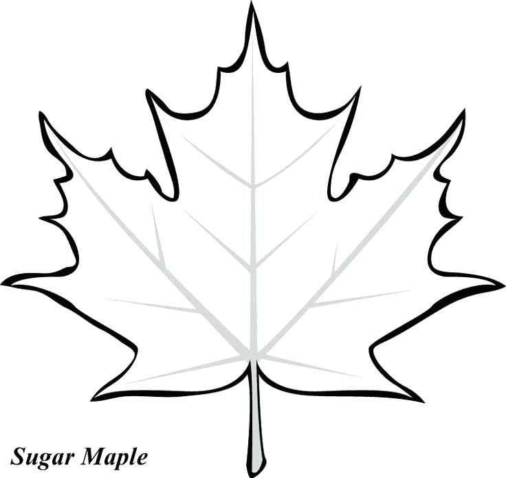 736x695 Leaf Coloring Pages Maple Leaf Printable Template Best Leaf