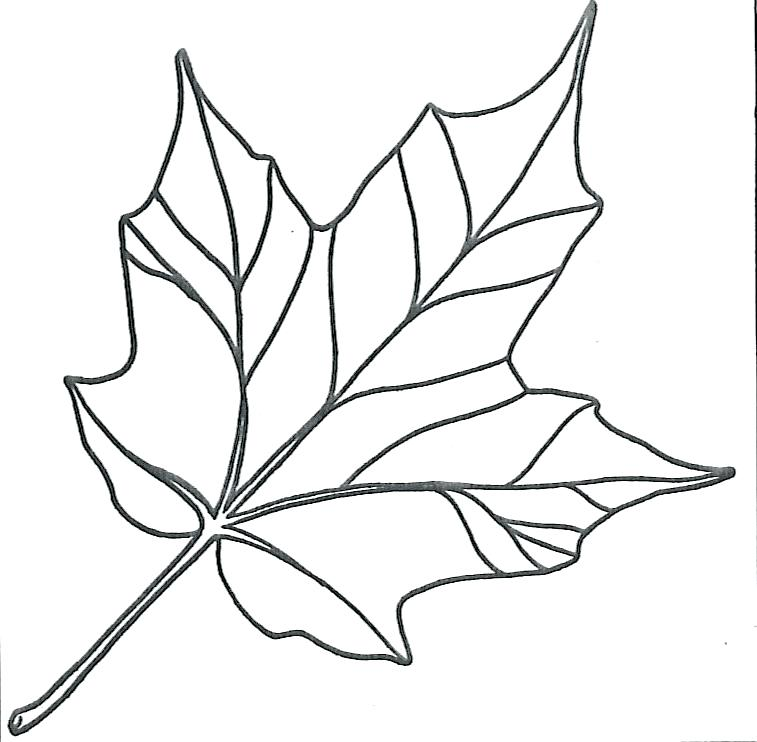 757x742 Leaf Coloring Template Maple Leaf Coloring Pages Pin Maple Leaf