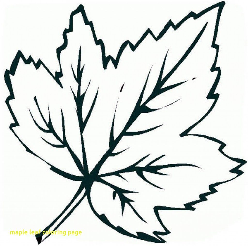1024x1017 Maple Leaf Coloring Page