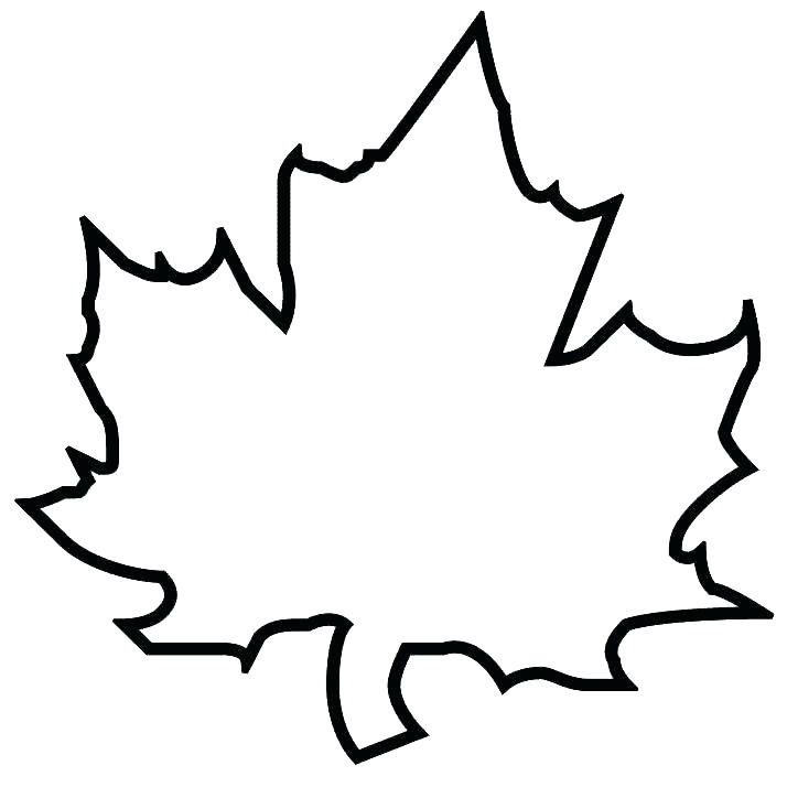 714x714 Maple Leaf Coloring Pages Maple Tree Leaf Coloring Page