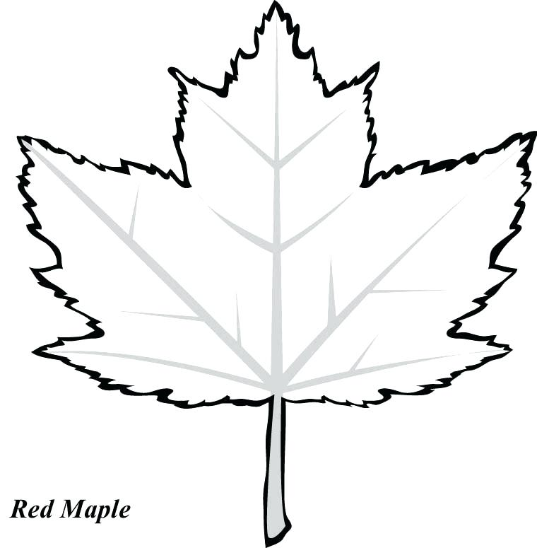 760x775 Coloring Page Leaf Red Maple Leaf Coloring Page Printable To Tiny
