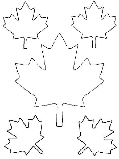 471x630 Maple Tree Coloring Page Various Type Of Maple Leaf Coloring Page
