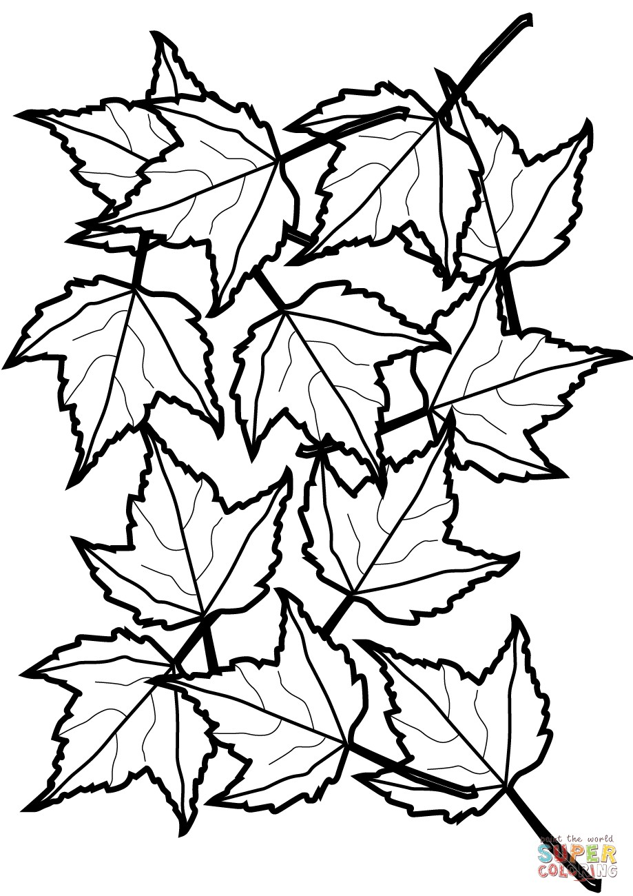 919x1300 Opportunities Pictures Of Leaves To Color Maple And Oak Coloring