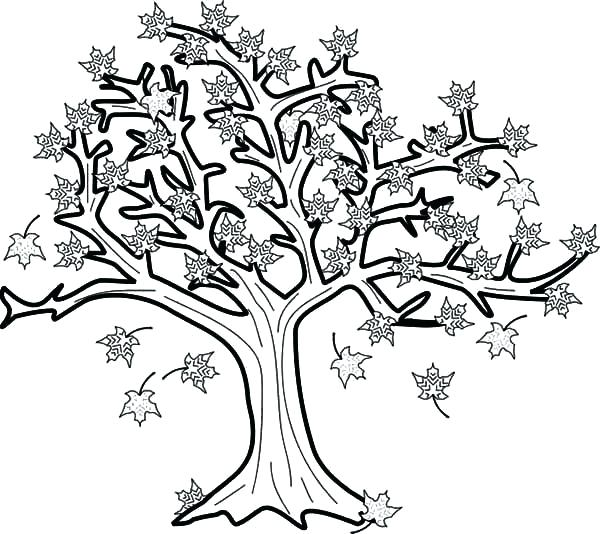 600x534 Tree Without Leaves Coloring Page Fall Tree Coloring Pages Maple