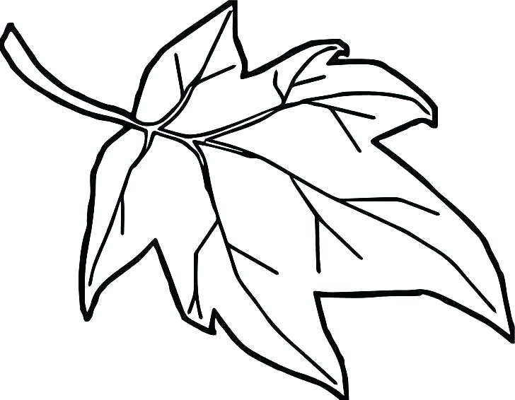 728x566 Fall Leaf Coloring Page