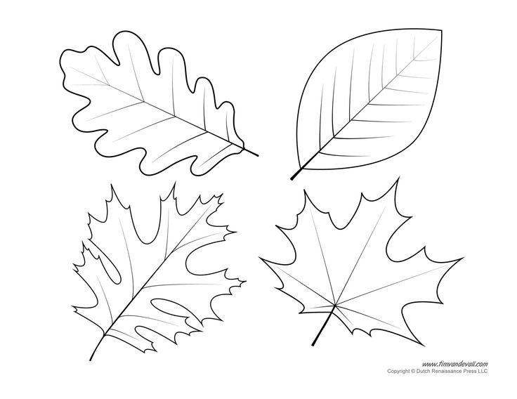 736x568 Free Maple Leaves Coloring Page Printable In Good Draw Print Leaf