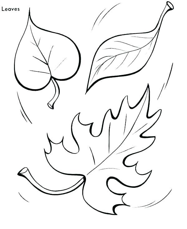 600x734 Leaf Color Pages Leaf Color Page Maple Leaf Coloring Leaf Color