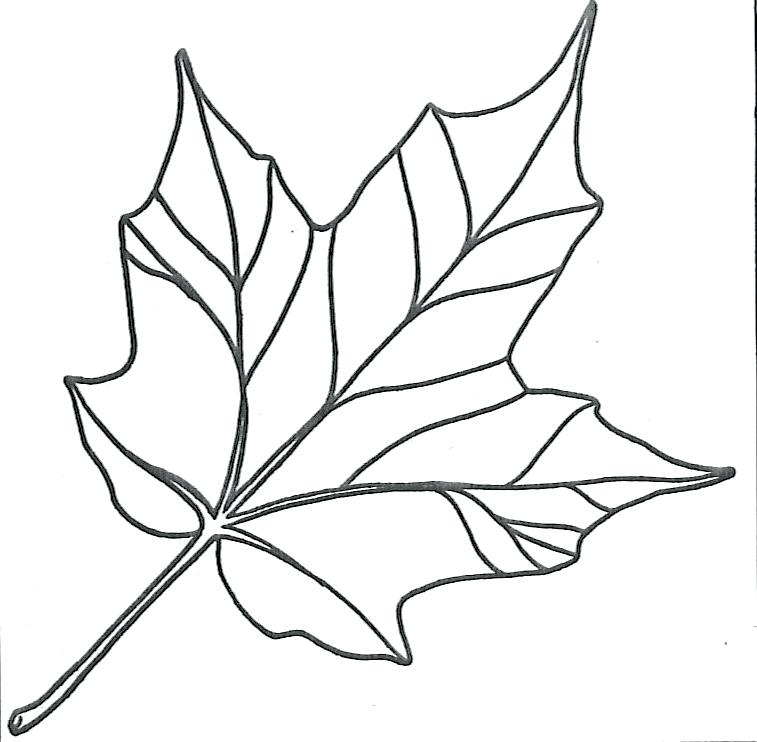 757x742 Leaf Coloring Maple Leaf Simple Leaf Coloring Pages For Toddlers