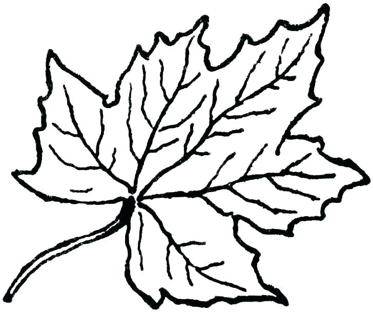 728x611 Leaves Coloring Pages Printable Leaf Coloring Pages B Fun