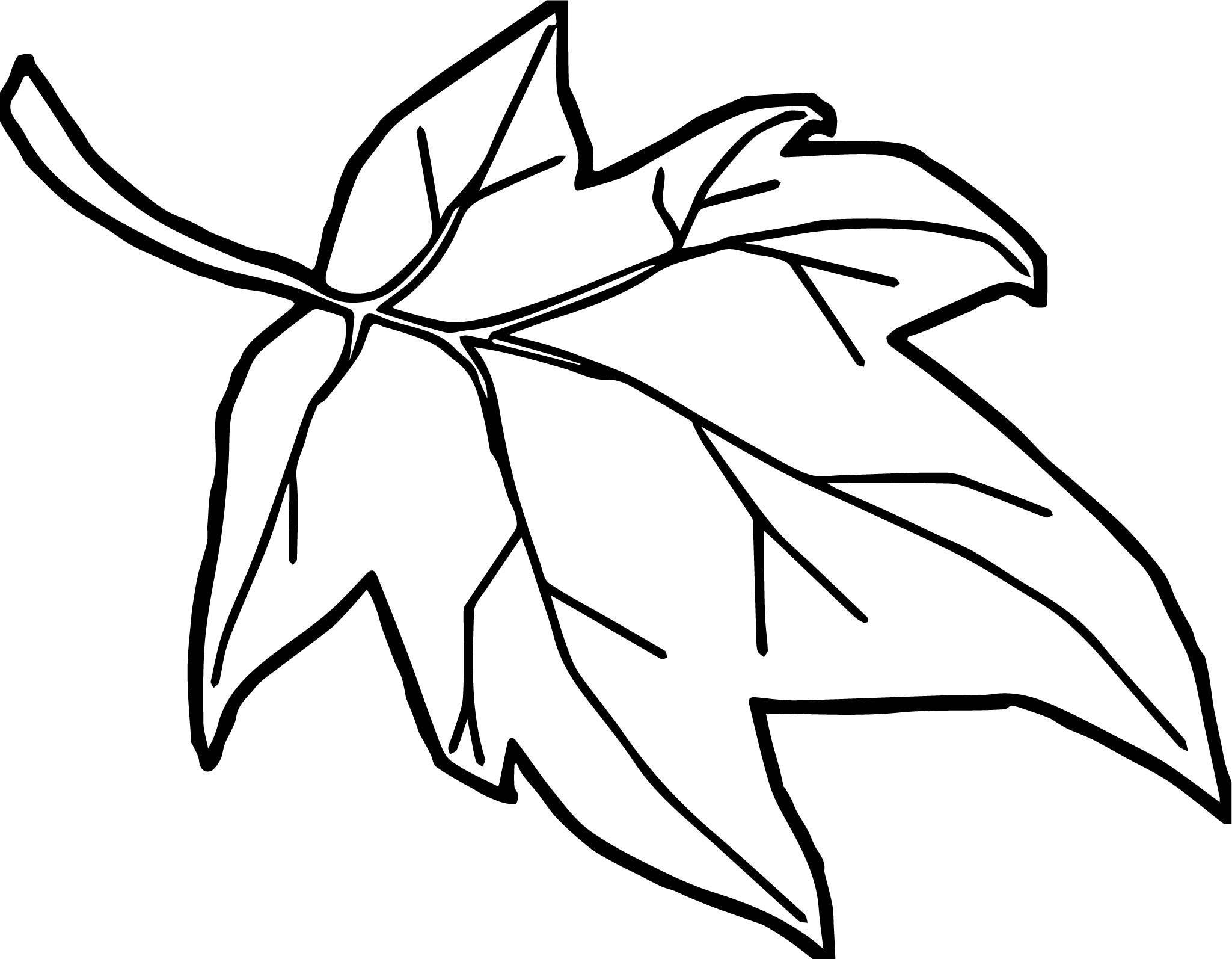 2049x1594 Maple Leaf Coloring Pages