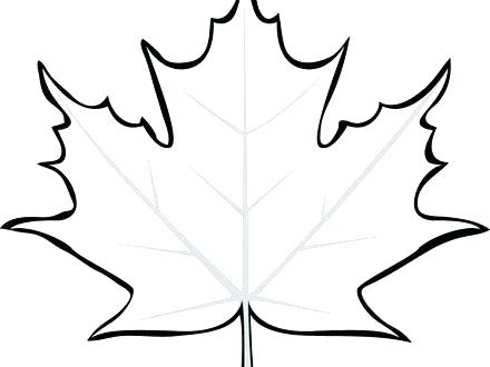 440x330 Maple Leaf Coloring Sheet Leaf Coloring Picture Maple Leaf