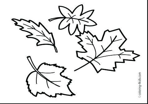 476x333 Maple Leaf Coloring Sheet Maple Leaf Coloring Sheet Maple Leaf