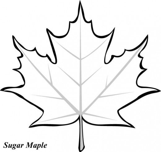 520x491 Maple Leaf Printable Coloring Pages Basteln Im Herbst