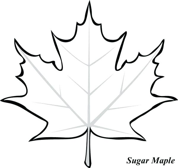 600x567 Maple Leaf Template Free Printable Kids Coloring Maple Leaf