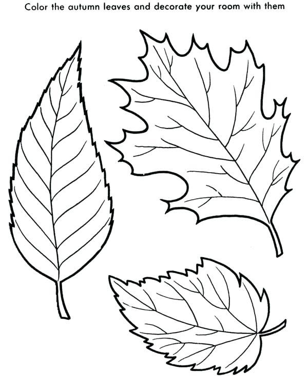 600x734 Pagina Para Colorear De Hoja De Arce Maple Leaf Is The Autumn