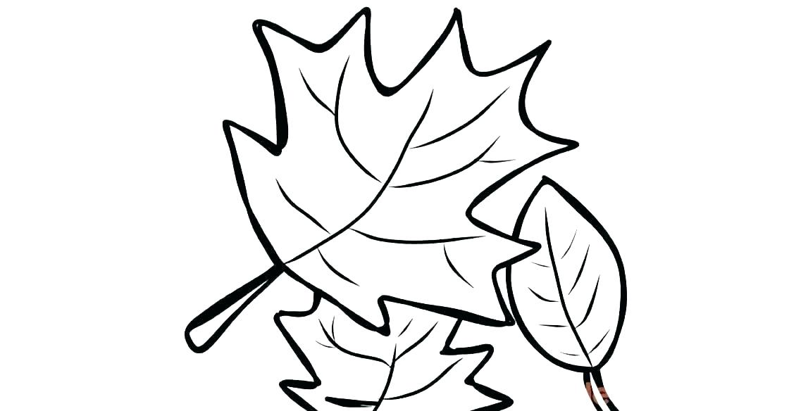 1120x584 Sugar Maple Leaf Sketch Maple Leaves Coloring Pages To Use