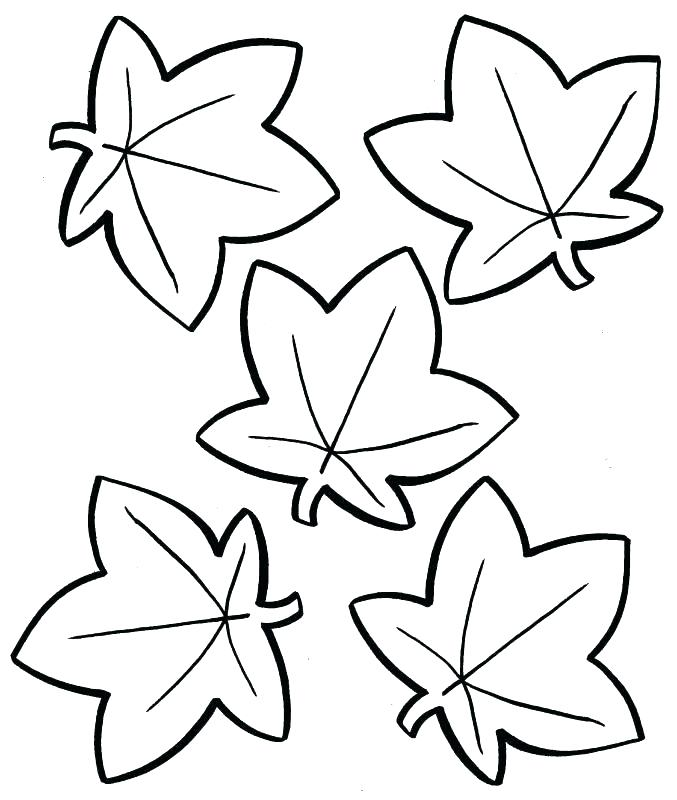 677x800 Toronto Maple Leaf Coloring Pages Printable Fall Page Leaves