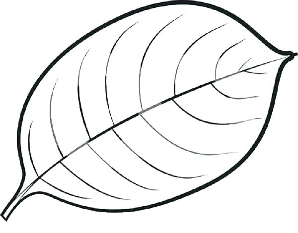 600x470 Coloring Pages Of Leaves Leaves Coloring Pages Leaf Coloring Pages