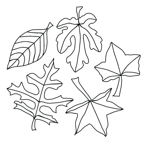 600x583 Fall Tree Leaves Coloring Page Autumn Pages A Lot Of Maple Leaf