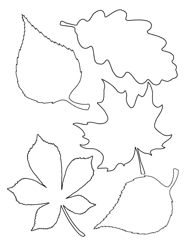736x952 Maple Coloring Pages Autumn Maple Leaves Coloring Page Free