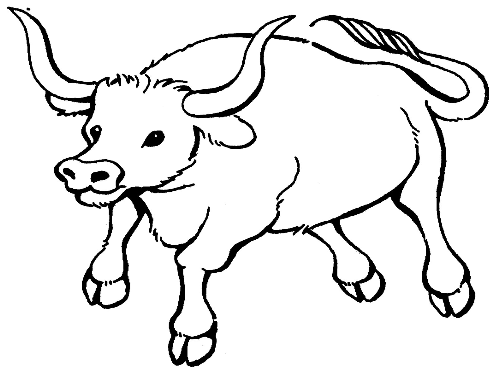 1600x1200 Bull Coloring Page, Bull Printable Coloring Pages