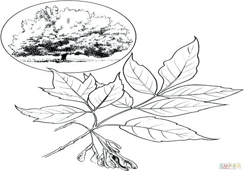476x333 Coloring Page Leaf Coloring Trend Medium Size Maple Syrup Bottle