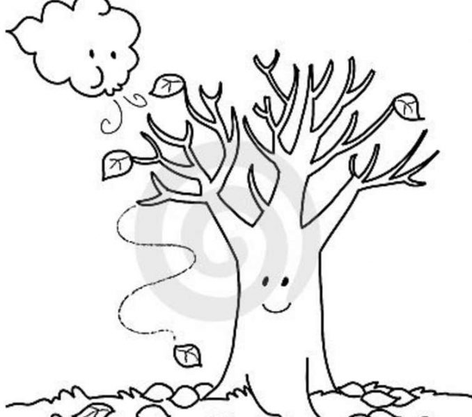 678x600 Free Printable Fall Tree Coloring Pages Maple Tree Coloring Page