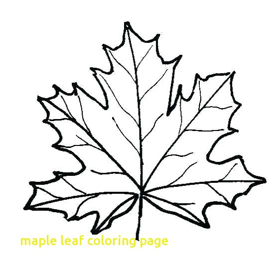560x540 Maple Leaf Coloring Page With Maple Tree Coloring Page