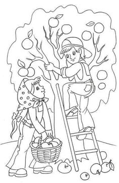 236x363 Maple Tree Coloring Page Worksheets, Kindergarten And Craft
