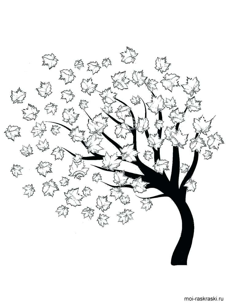 750x1000 Maple Tree Coloring Page Maple Tree Coloring Page Maple Tree Pages