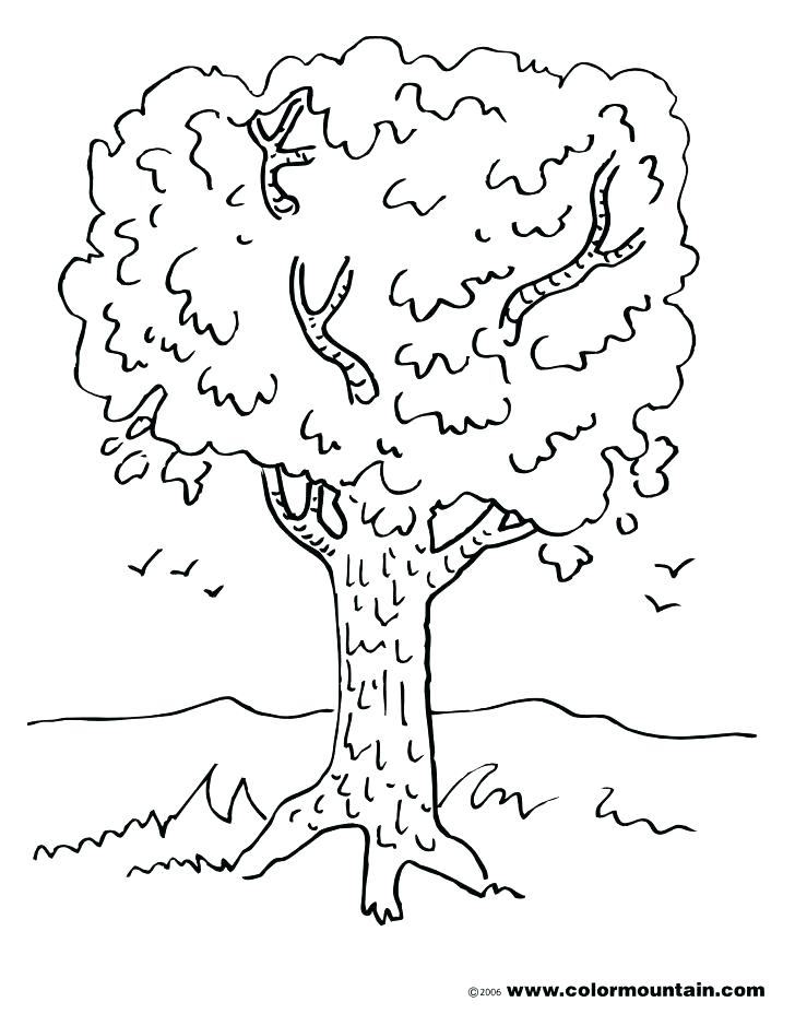 728x928 Maple Tree Coloring Page Tree Trunk Coloring Page Maple Tree