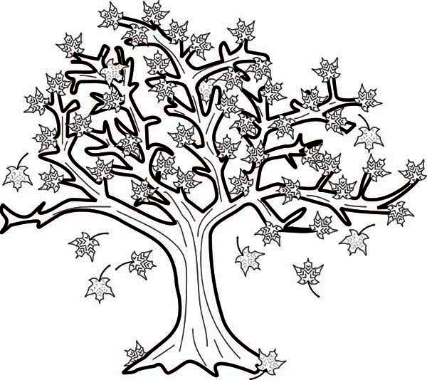 600x534 Maple Tree In Fall Leaf Coloring Page