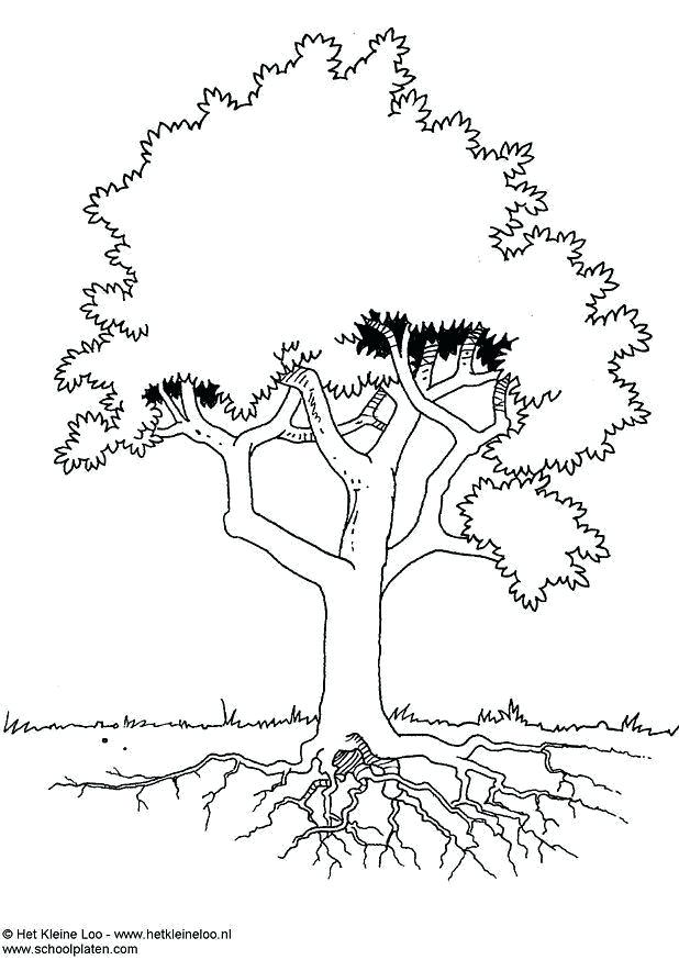 618x874 Oak Tree Coloring Page Oak Leaf Coloring Page Maple Tree Coloring