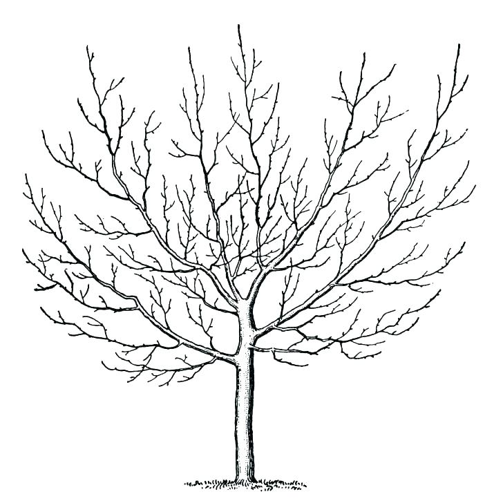 728x728 Winter Tree Coloring Page Maple Tree Coloring Page Winter Tree