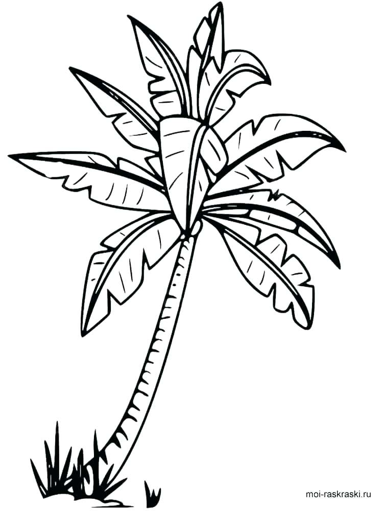 750x1000 Coloring Pages Of Trees With Leaves Free Printable Tree Coloring