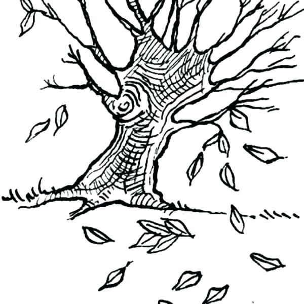 600x600 Fall Leaves Coloring Pages Tree Without Leaves Coloring Page Fall
